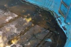 vorher-Pool-Reinigung